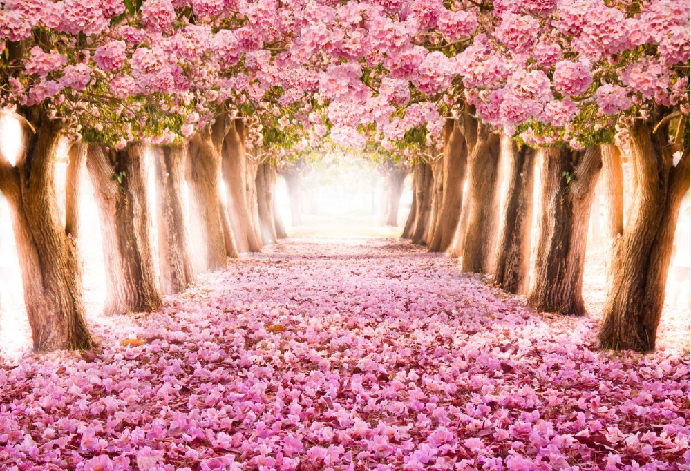 online get cheap fleur chemin toile de fond -aliexpress