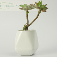 Buy mosaic garden pots and get free shipping on aliexpress ncyp simple white ceramic mosaic novel flower pot planter workwithnaturefo