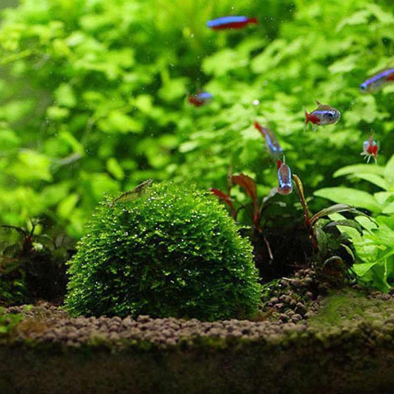 Animal de estimação Em Casa DIY Decoração do Tanque de Peixes de Aquário Filtro de Mídia Bola Musgo Para O Live Planta Peixe Aquático Ornamen Decorações Animais de Estimação Suprimentos