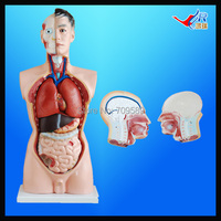 ISO 85CM Male Torso With Internal Organs 19 Parts Human Torso Anatomy Torso Mannequin
