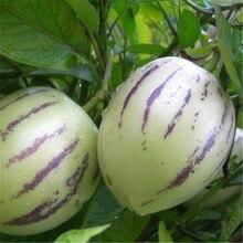 20 штук Пепино семена Solanum muricatum дыни груша Семена Фруктовые домашний сад Карликовые деревья завод DIY