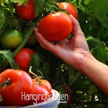 Распродажа! 100 шт./лот, красный томат Флорес, балкон, овощи, бонсай, Горшечное томатное растение, садовые фрукты,# PA4YHX