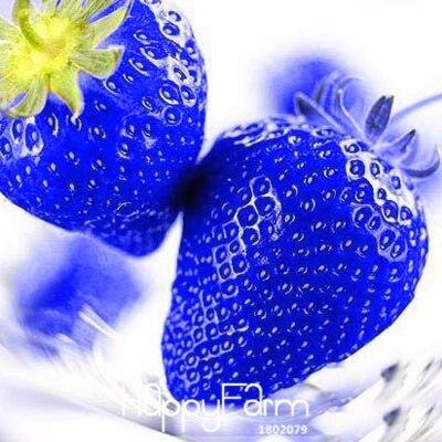aliexpress com buy new fresh 50 pcs blue rare fruits and