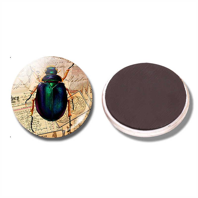 Насекомое 30 мм магнит на холодильник Жук винтажный Викторианский насекомое