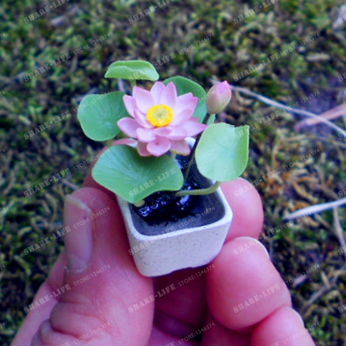 10 Pcs Mini Lotus Flower Bonsai Diy Potted Plants Indoor Pot Bonsai Germination Rate Of 95% Mixed Colors Bonsai Home Garden