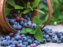 Highbush Blueberry Fruit Seeds, Dwarf Blueberry Seed, 100pcs/pack