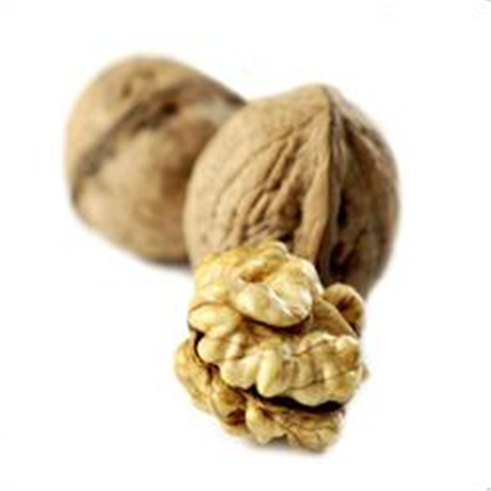 200g Walnut Extract / natural pure 100% Supply Walnut Kernel Extract
