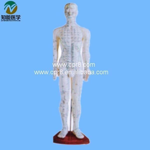 BIX - Y1006 Acupuncture Model (Male)  60CM   G067 bix y1002 human acupuncture model bronze  178cm wbw332