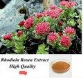 100g Golden Root/Hong Jing Tian/Rhodiola Rosea Polvo del Extracto, alta Calidad