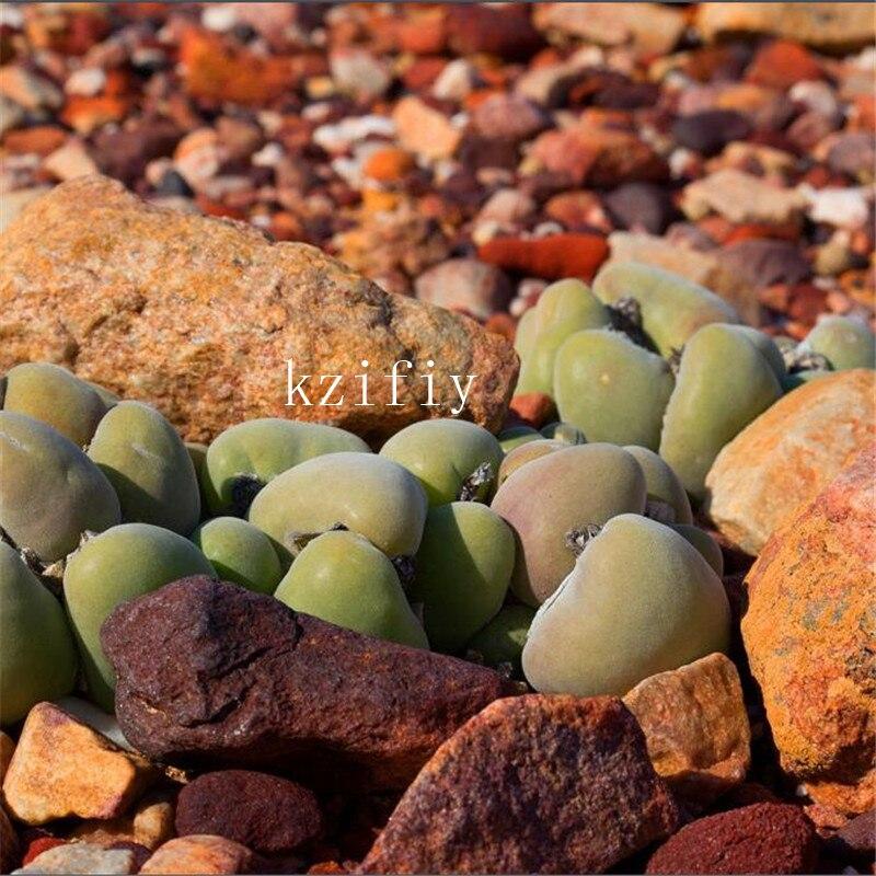Flor de piedra cruda importada bonsais, suculentas, ha aspirado el efecto del formaldehído y purifica el aire-100 piezas