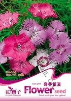 (Mix minimum order $5)1 original pack 30 pcs Lilac pink Flower Seeds,Dianthus Superbus Seed flower seeds free shipping