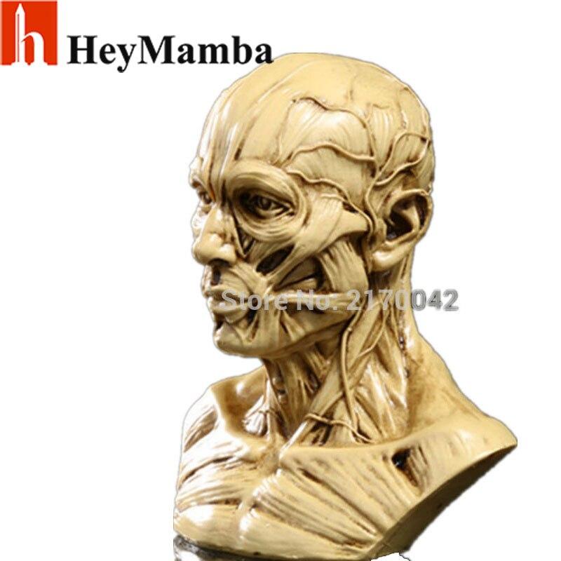 Resin Human Skull Skeleton Bones Statue Figurine Human Musculus