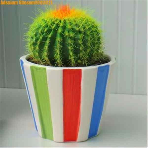 Sales! 100pcs rare mini cactus plant Japan best-selling plant cactus bonsai indoor ornamental plants purify air free shipping