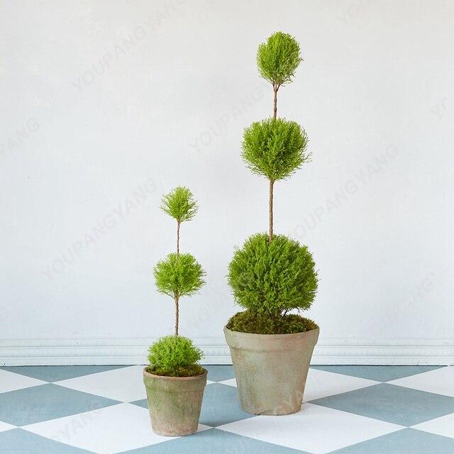 100 pz Piccolo Rotondo Cipresso Albero bonsai Molto Facile Crescere Bella Cipresso bonsai albero plantas Per La Casa Giardino Piante da Interno