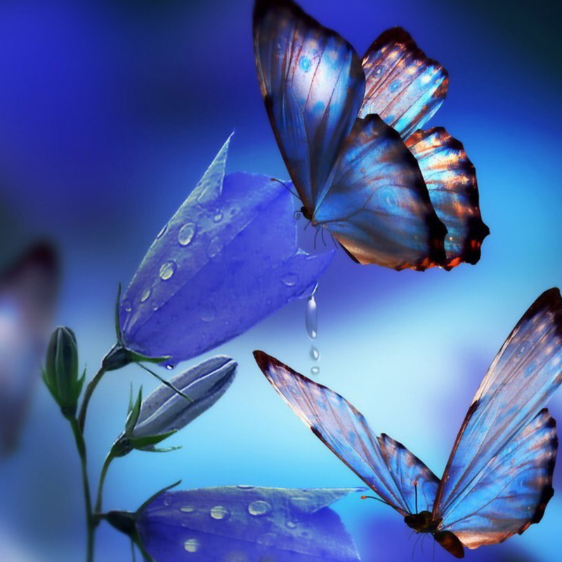 Butterfly-flowers-nimal-new-arrival-DIY-Crystal-full-drill-square-5D-diamond-painting-cross-stitch-kit (3)