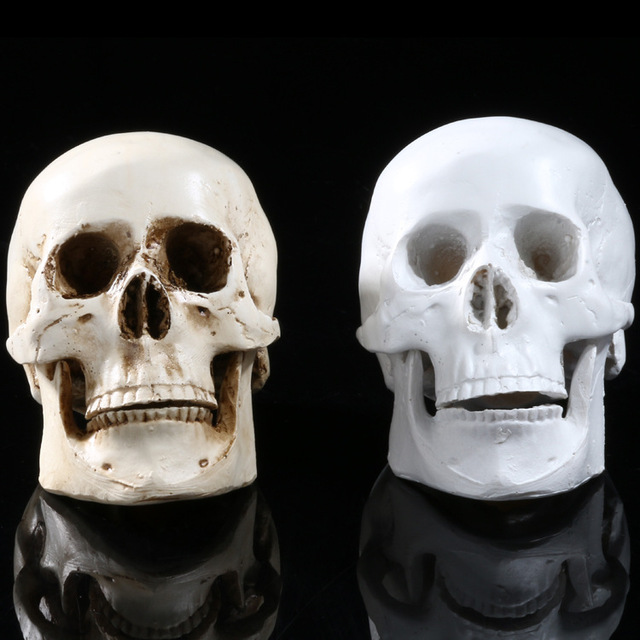 Medical Study Skeleton Skull Specimen Resin Crafts Halloween Home  Decorations Accessories Furnishings Model SKULL119