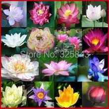12 Шт./Lotus Flower/Семена Лотоса/Вода Растения для Сада/Научить Вас Как посадить Цветок Лотоса/бесплатная Доставка