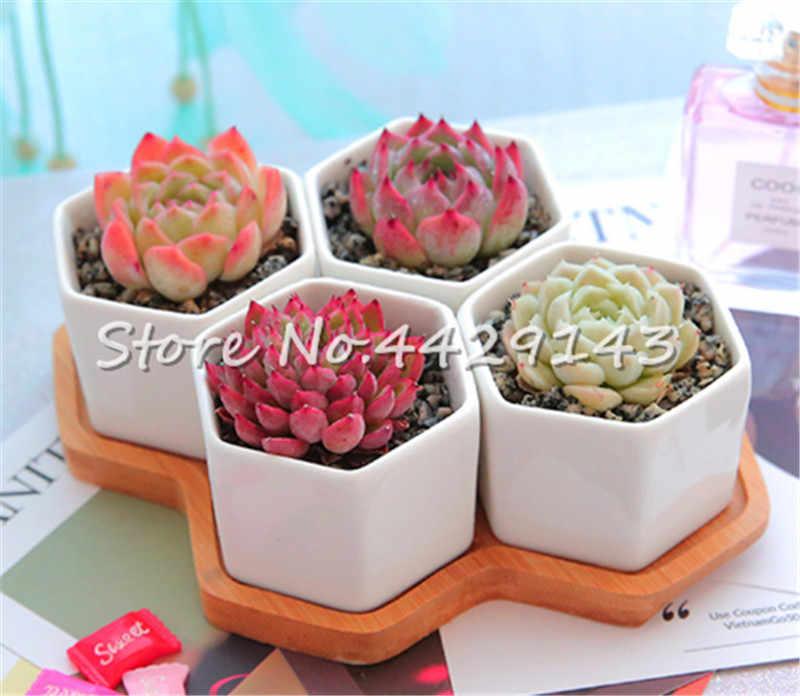 100 pcs Exotic Cactus bonsai Japanese Rare Succulents plants Flower Indoor Plantas Perennial Flowers Garden Mix Lithops Bonsai