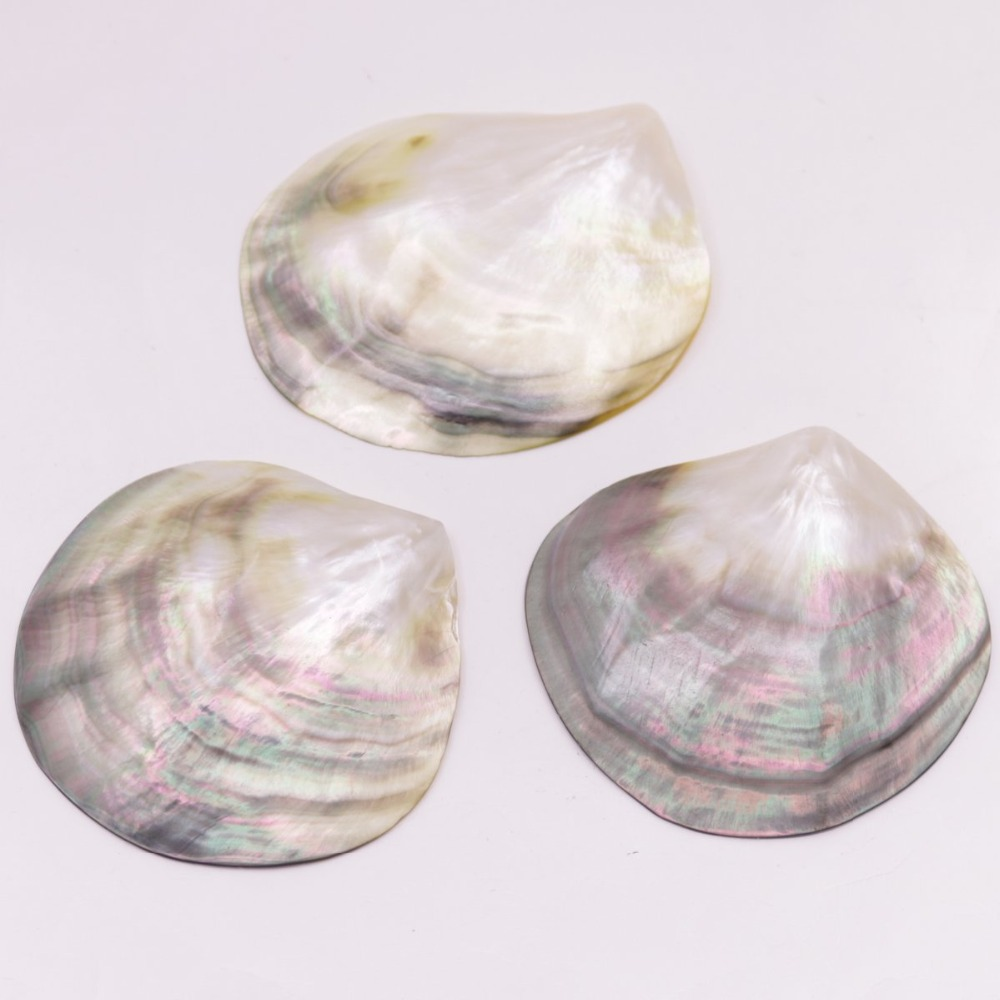 Купить с кэшбэком 3 PCS 70mm-80mm Fan Shape Shell Natural Mother of Pearl No Hole Jewelry Making