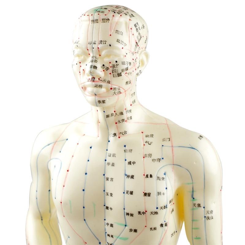 Schön Anatomie Körperbild Fotos - Anatomie Ideen - finotti.info