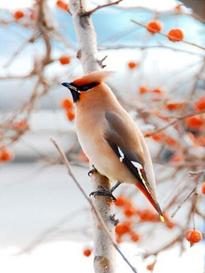 Online get cheap hiver oiseau photos for Oiseaux des jardins en hiver