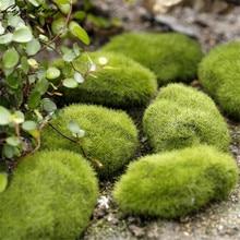2 PCS 6 CM Green Artificial Moss Stones Grass Plant Poted Home Garden Decor Landscape Green Plant Home Decor Wholesales D6