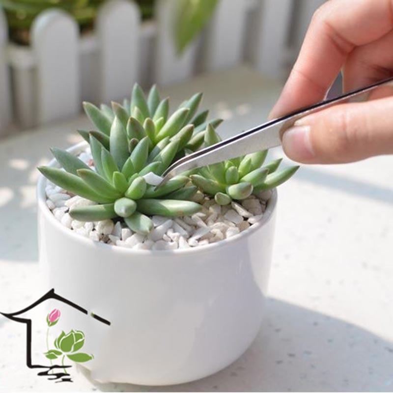 2pcs/lot Stainless Steel Curved Tweezer Stainless Steel Tweezer Outdoor Bonsai Tools Succulent Tools Plant Home Garden Tools