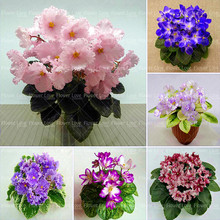 цена на 100pcs African Violet Bonsai Flower Potted Plants Violet Flowers Perennial Plant For Home Garden potted plants Planting