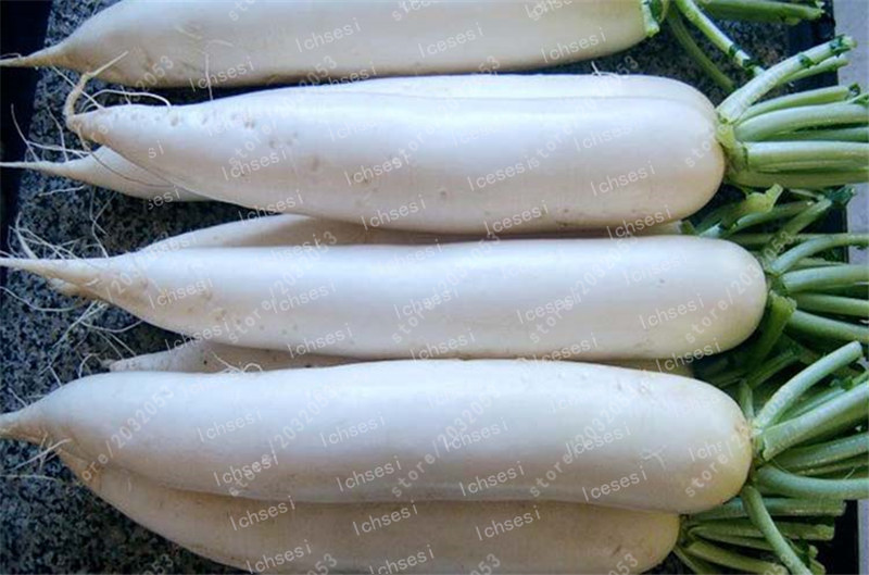 100 Pcs Rare White Radish Bonsai Juicy And Nutritious Early Spring Radish Very Delicious Vegetable Garden Food Easy To Grow