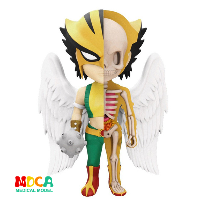 HawkGirl 4D XXRAY master Mighty Jaxx Jason Freeny anatomy Cartoon ornament robin hood 4d xxray master mighty jaxx jason freeny anatomy cartoon ornament