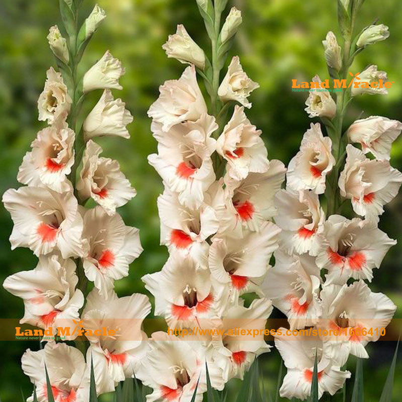 popular lily flower typesbuy cheap lily flower types lots from, Beautiful flower