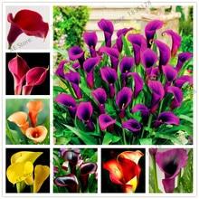 Большая распродажа! 100 шт./пакет Калла цветок лилии Флорес, многолетний редкий Бонсай завод для дома и сада, свадебные букеты использовать