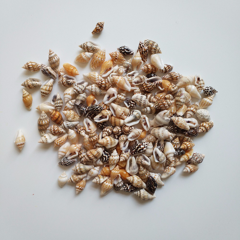 Mling 0.9-1.5cm 80pcs/lot Natural Conch Shells Mini Conch Corn Screw Wall Decoration DIY Aquarium Landscape Seashells