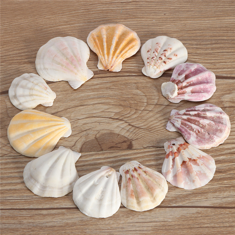 10PCS Mediterranean Style Beautiful Beach SeaShells Mix Sea Natural Shells Shell Crafts For Aquarium Fish Tank Decor