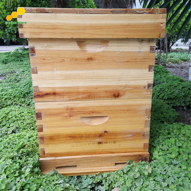 Glorious Future Fir Wood Material 2 Layers Bee Hive For 20 Frames ...
