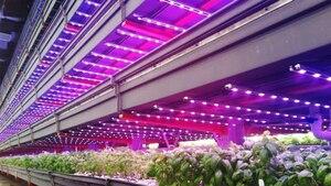 Image 2 - 1000 adet 0.5W 660nm büyümeye LED diyot 5730 5630 ışık büyümeye yol açtı kırmızı bitki LED SMD diyot ışık büyümeye yol açtı lamba Lampada Plantas ekici