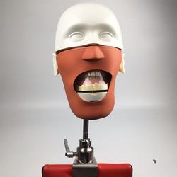 Oral Cavity Simulation Training Dental phantom head model NISSIN Dental manikins and models Phantom Head for dental education