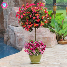 New arrival!!!100 pcs/lot Lantana camara flower seeds,Rare Perennial Herb Gorgeous Bonsai Tree Plant For Home Garden potted seed