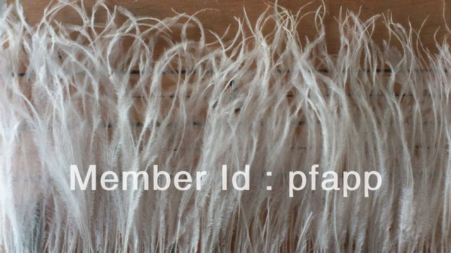Factory Price, Onsale, Cheap, Good Quality, Ostrich Feather Trimmed Fringe, 13-15cm, 2yards or customized