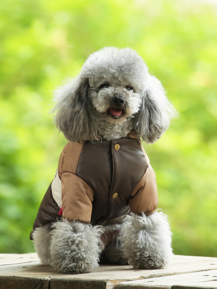 ⑧ Low price for xxl dogs and get free shipping - 0k8i5lfa