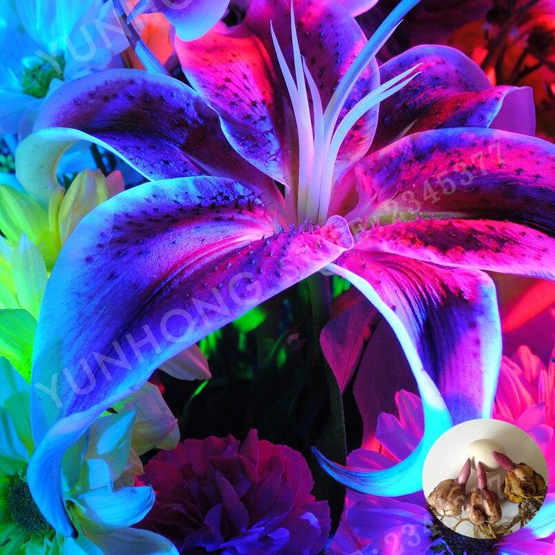 2 шт./пакет редкая Синяя лилия лампочка, не Лилия Горшечное растение, это лампочка, растение Лилия лампочка, приятный аромат, домашние и садов...