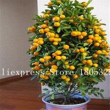 Seeds/bag edible orange potted climbing tree fruit bonsai seeds