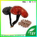 Chinese Organic Natural Herbs Organic Reishi Mushroom Spore Extract Powder Tablets/Capsule 500mg*1000pcs