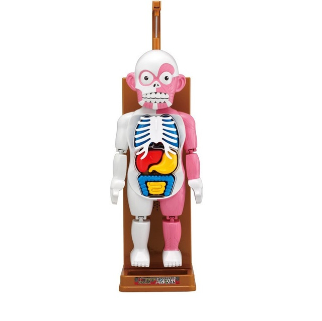 child educational toy human body model puzzle for learning
