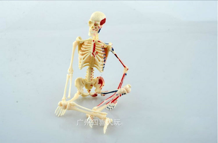 46pcs Assembly 4d Master Mini Human Skeleton Anatomy Model Medical