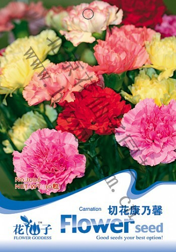 3 Packs 90 of Mixed Color Carnation Seeds,Dianthus Caryophyllus Flower Seed J006