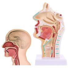 Menschlichen Anatomische Nasenhöhle Kehle Anatomie Medizinische Modell Lehre Werkzeug Medizinische Wissenschaft Schreibwaren für die Schule