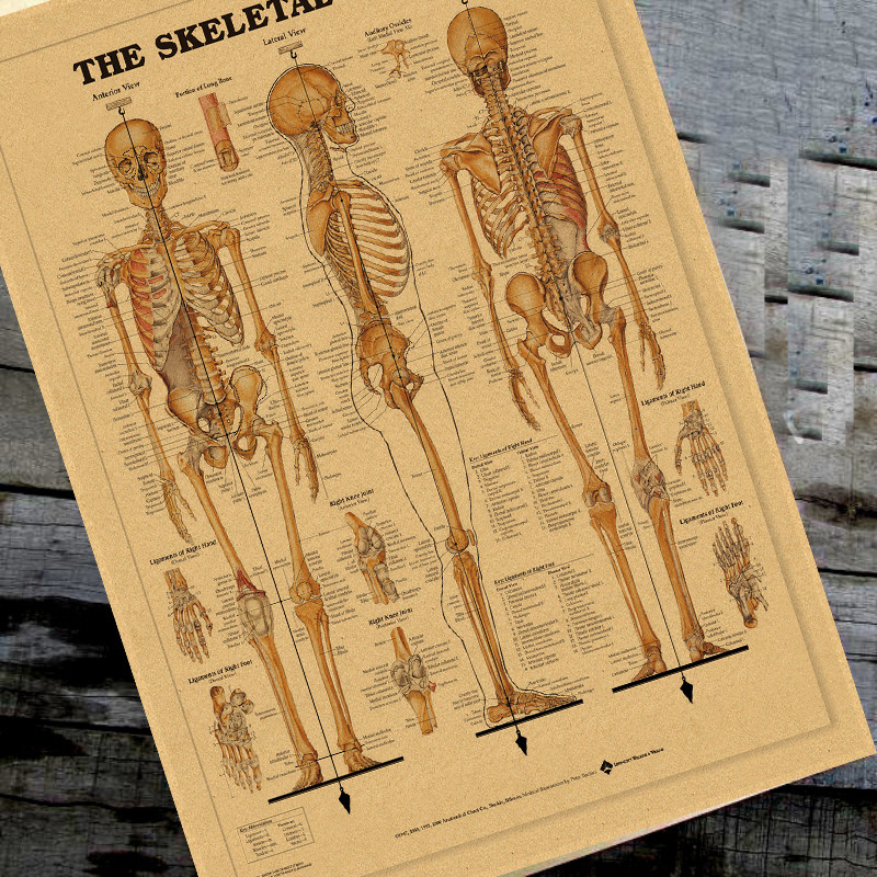 Tienda Online Cuerpo humano Anatomical Chart sistema muscular seda ...