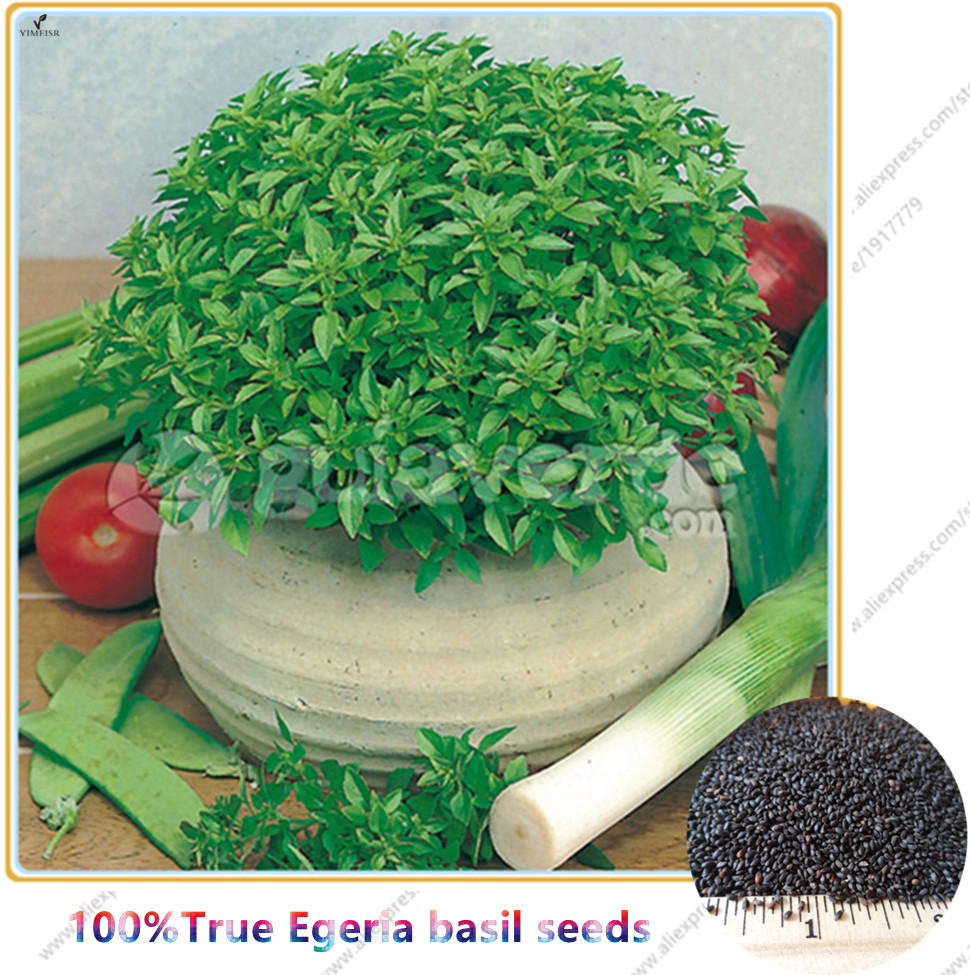 how to cook basil seeds
