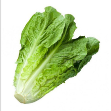 Outdoor Plants Very Easy Mini Garden Summer Sementes Seeds Fast-growing Lettuce Seed 200 seed
